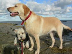 Paws Patrol Image Gallery - click to enlarge